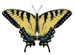Eastern Tiger Swallowtail Butterfly Victorian Style Necklace