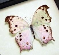 Mother of Pearl Butterfly Silver Rectangle Necklace